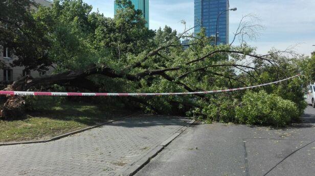 Powalone drzewo w Śródmieściu warszawa@tvn.pl