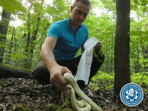 Szukają węża nad Wisłą, innego znaleźli na Bielanach