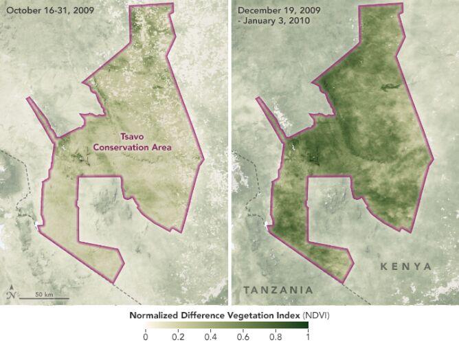 Populacja słoni spadła w 2009 roku (NASA/Joshua Stevens/LPDAAC/Google Earth)