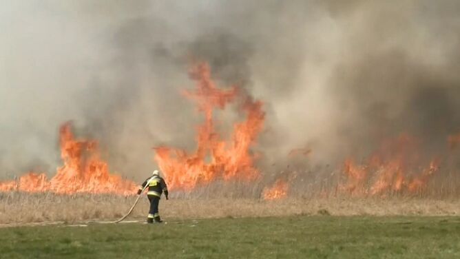 Pożar w Biebrzańskim Parku Narodowym. <br />Spłonęło około 500 hektarów lasów i łąk